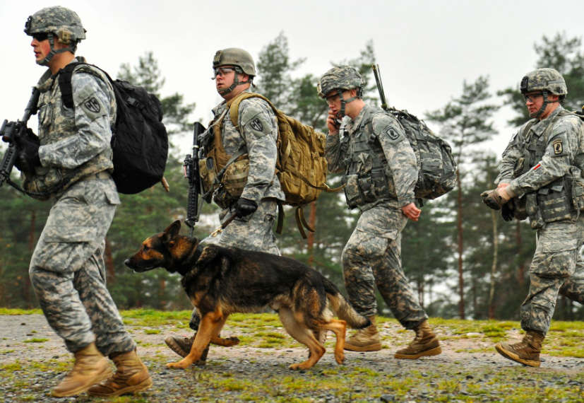 U.S. paratroopers assigned to 1st Squadron, 91st Cavalry Regiment, 173rd Airborne Brigade, alongside a K-9 Military Working Dog Team with 615th Military Police Company, conduct an assault in an urban environment during training at the 7th Army Joint Multinational Training Command's Grafenwoehr Training Area.
