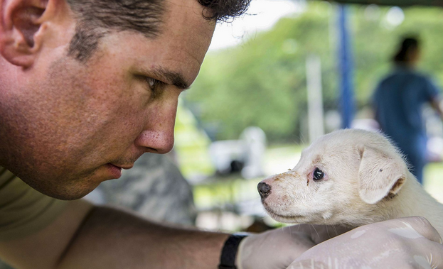 Army Staff Sgt. Thomas Worley examines a puppy during a Continuing Promise 2015 veterinary event in Colon, Panama. | Military Times >>