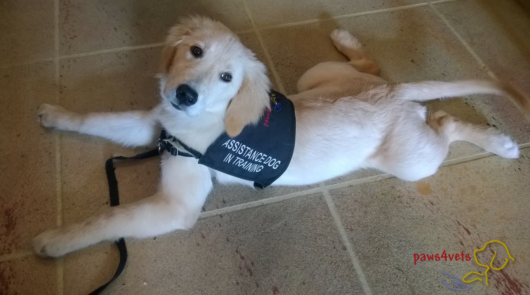 Jackie Maffucci Service Dogs Blog