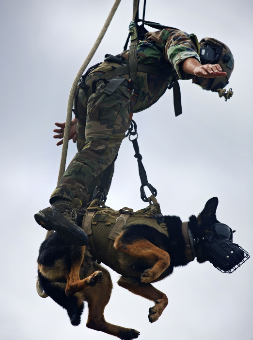 A Marine and his multipurpose canine, both with Marine Raider Regiment, hang from a UH-1Y Huey assigned to Marine Light Attack Helicopter Squadron 167, during special patrol insertion/extraction training at Stone Bay, Camp Lejeune, N.C. | Military Times >>