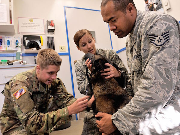 Army Pfc. Richard Schmidt, a veterinary technician at Public Health Command District-Japan's Okinawa branch, prepares to administer a shot to Ayila, an 18th Security Forces Squadron military working dog, while 18th SFS MWD handlers comfort her during an annual dental examination. | Military Times >>